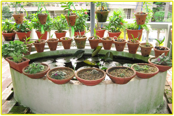 Terrace garden services chennai roof garden kitchen for Terrace garden in india